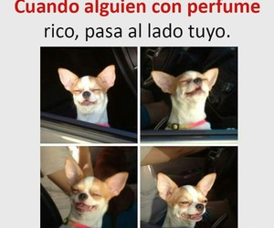 divertido, funny, and humor image
