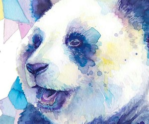 panda and colors image