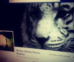 facebook, tiger, and time line image