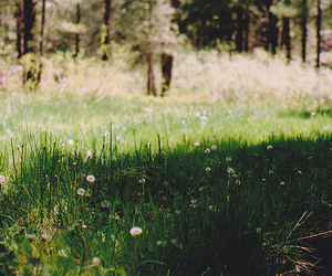 35mm, flagstaff, and meadow image