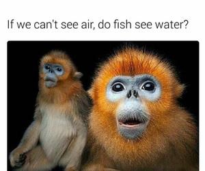 air, fish, and humans image