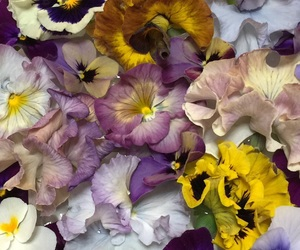 flower, pansy, and spring image