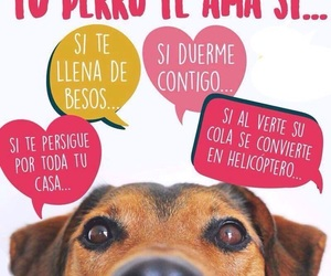 bff, dog, and perros image