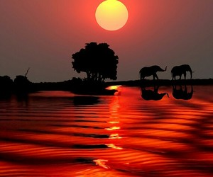 elephant, sunset, and africa image