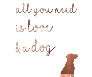 dog, wallpaper, and quotes image