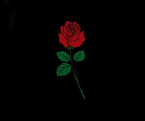 rose, sad, and love image