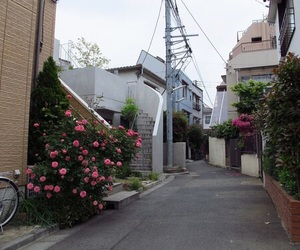 aesthetic, city, and flowers image