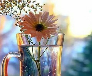 coffee, white, and flower image