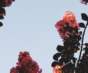 floral, ipone, and wallpaper image