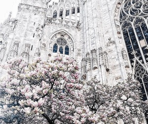 blossom, view, and europe image