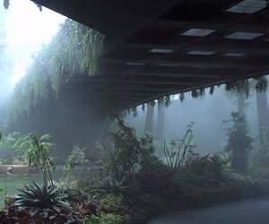 plants, green, and bridge image