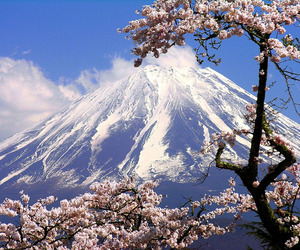 flowers, mountain, and landscape image