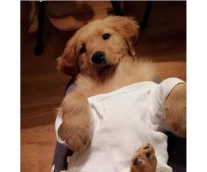 funny and puppy image