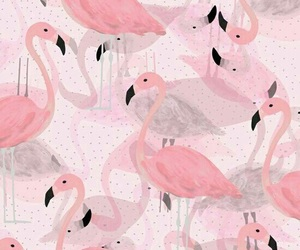 pink, flamingo, and wallpaper image