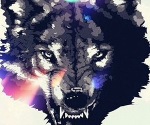 wolf, wallpaper, and background image