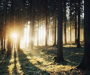 forest, places, and travel image