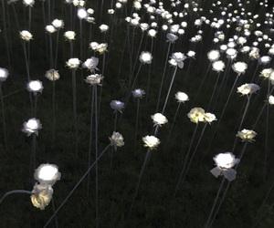 korea, light, and rose image
