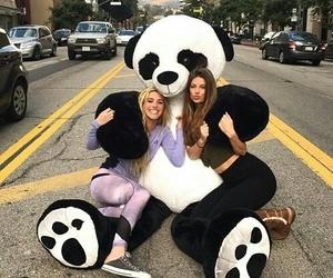 funny and panda image