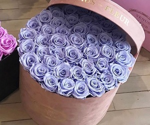 purple and roses image