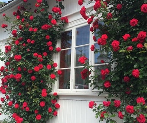 rose, flowers, and house image