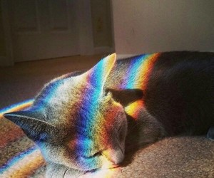 cat, cats, and rainbow image