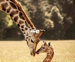 giraffe, love, and mother&son image