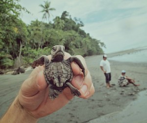 adventure, turtles, and cute image