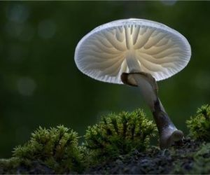fungi, images, and moss image