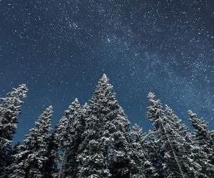 forest, milky way, and space image