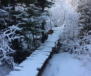 bridge, cold, and white image