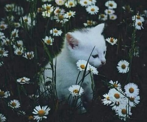 flowers and kitten image