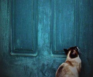 cat, door, and blue image