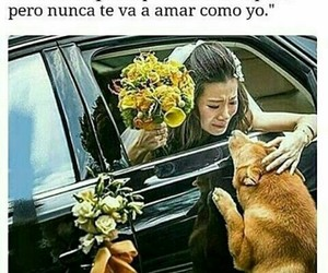 dog, family, and frases image