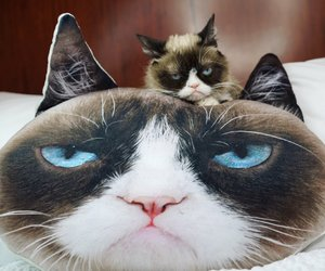 cat, grumpy, and kitty image