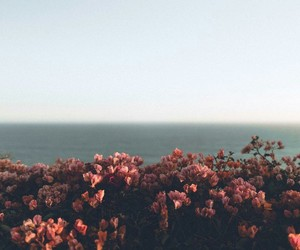 flowers, sky, and sea image