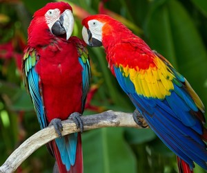 beautiful, parrot, and colors image
