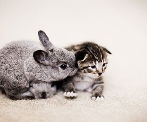 cat, bunny, and rabbit image