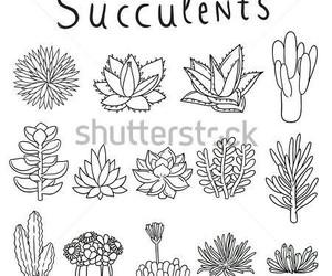cactus, succulents, and doodle image