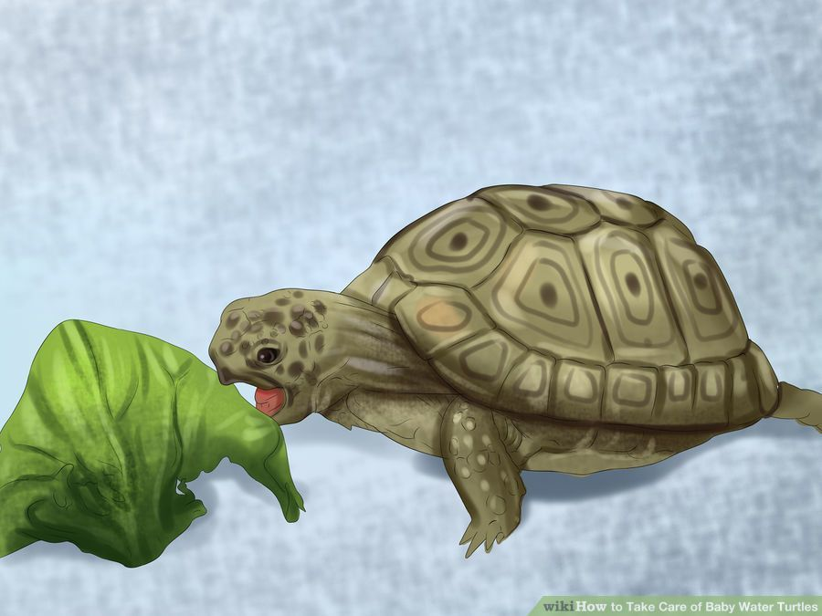 Wikihow To Take Care Of Baby Water Turtles On We Heart It