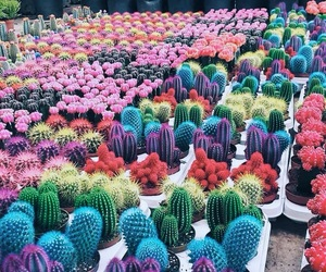 cactus, colors, and plants image