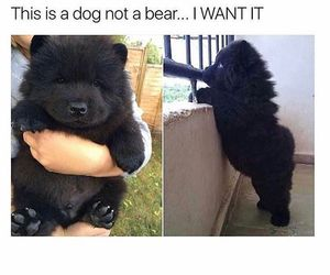 dog, cute, and bear image