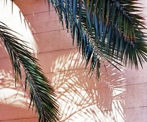 holiday, palm tree, and pink image