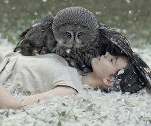 owl and snow image