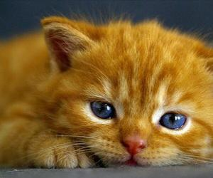 blue eyes, cats, and cuties image