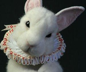 rabbit and wonderland image