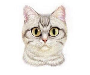 art, cat, and animals image