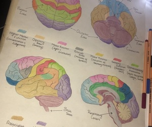 brain, psychology, and revision image