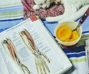 anatomia, Estudio, and gato image