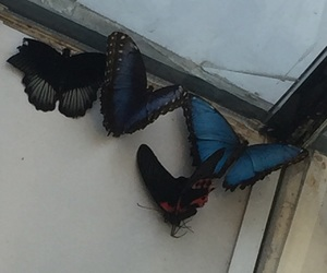 butterflies, sharjah, and alnor park image