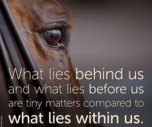 animal, horse, and quote image